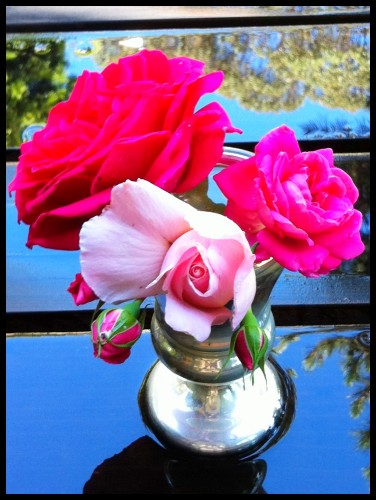reflected roses